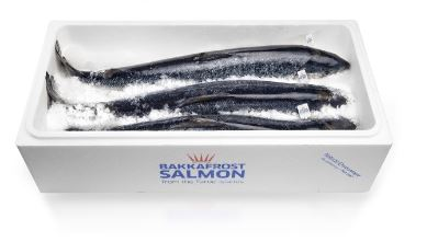 Bakkafrost Shuts Down Salmon Harvesting Due to Listeria; Market to be Short Large Fish