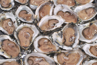 With Diners Prizing Maine Oysters, Farming Them Booms Along Coast