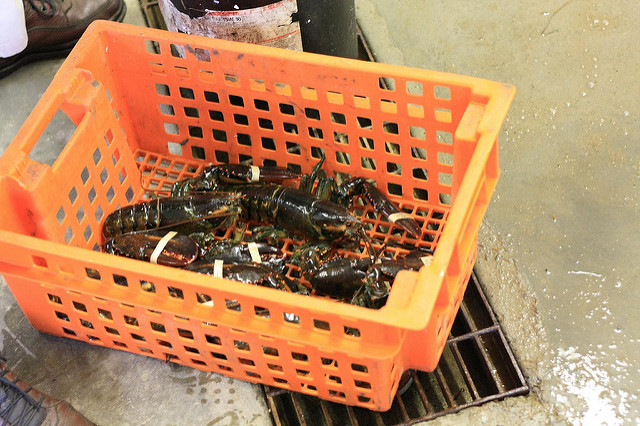 Live Lobster Exports from U.S. to China Plunge 64% after Tariff