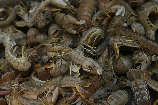 India's Boosters Say they will Overtake China in Shrimp Production This Year; Others Skeptical